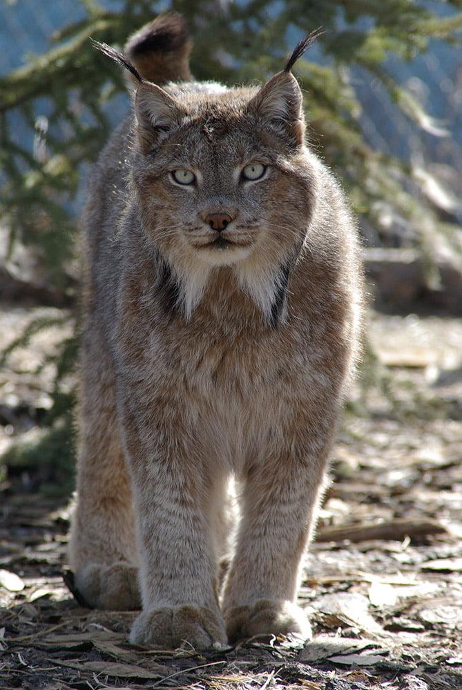 Yukon Wildlife Preserve Yukon Territory Alaska Northern