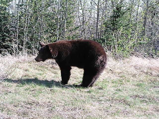 Wildlife Yukon Territory Alaska Northern British Columbia